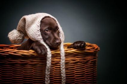 trouver une place dans la maison pour son chien et l 39 am nager. Black Bedroom Furniture Sets. Home Design Ideas