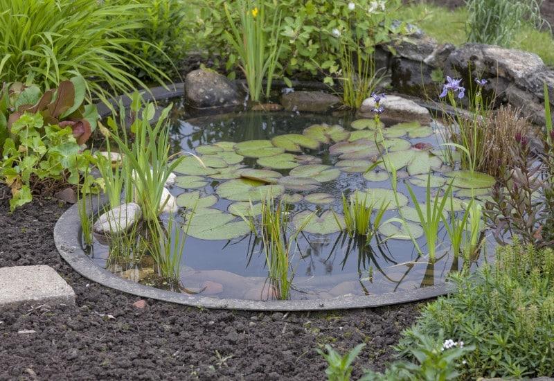 D co jardin exterieur bassin for Deco maison et jardin